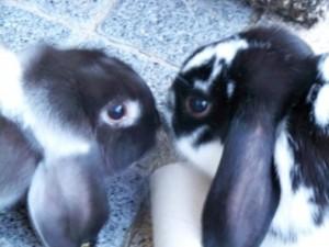konijnennatasja